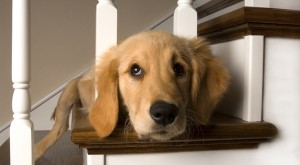 Home security systems for pet owners